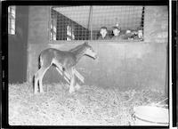 Ritzer Colt [Unpublished]