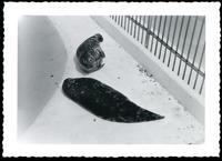Quebec zoo seals