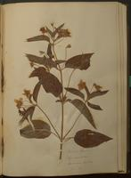 Botanical specimen album no. 2