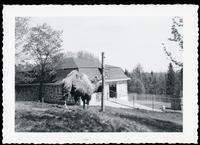 Quebec zoo camels