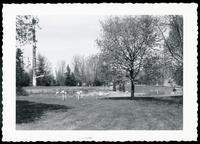 Quebec zoo flamingoes