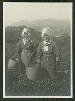 Smiling women gathering tea leaves in a field