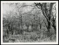 ? in Kruger Park