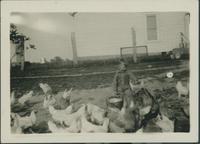 Child feeding chickens.