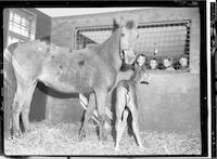 Ritzer Colt [Published]