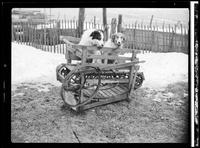 Dog Powered Machine [Unpublished]