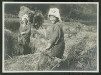 Smiling women gathering hay in a field