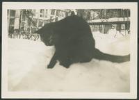 Spirit cat with kitten, Dec. 26, 1944